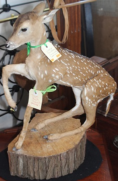 Vintage Taxidermy Fawn (Baby) Deer Mount